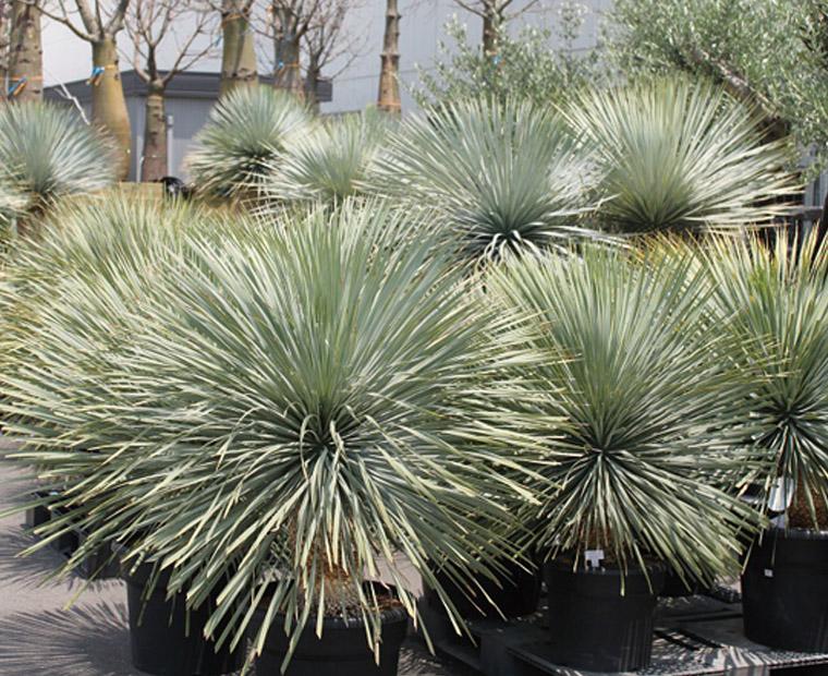plantList-img1