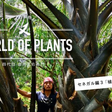 LOVEGREEN連載「世界の植物紀行-四代目金岡又右衛門」が公開されました。